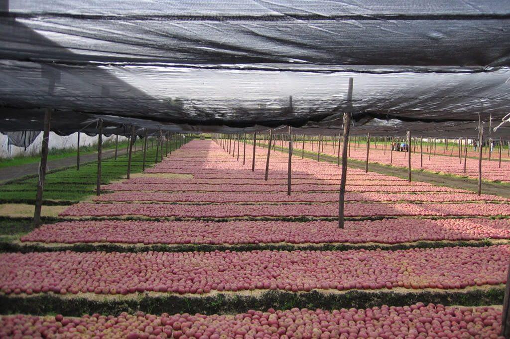 agricoltura turismo nel telaio in Campania